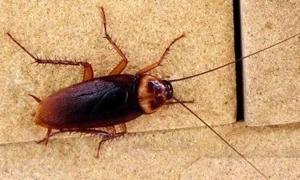 Cockroach service chennai