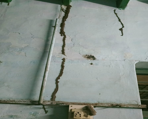 Pest Control Services in Kolathur